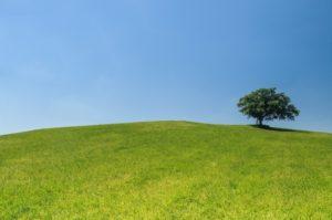 hill-meadow-tree-green-medium